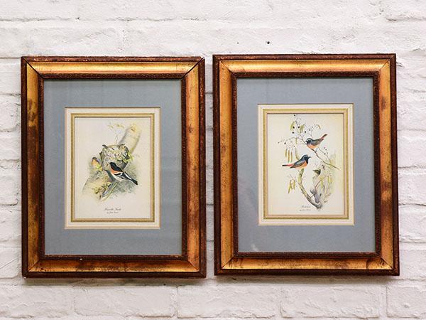 ドレクセル・ヘリテイジ DREXEL HERITAGE / USA John Gould 鳥類図鑑(印刷物) 額縁 2点セット