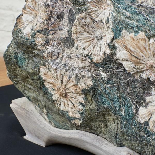 大型 菊花石